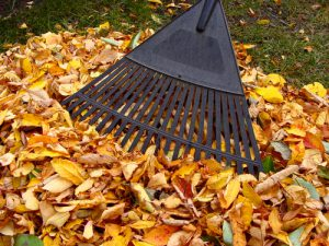 help-raking-leaves-yard